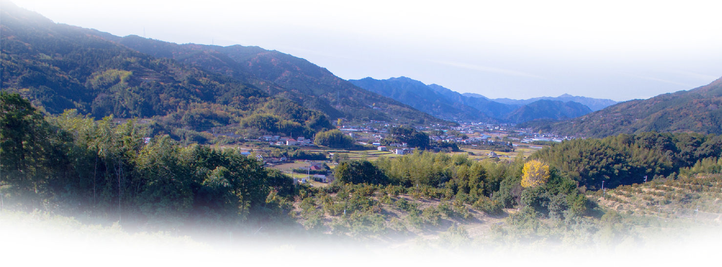 勝浦の風景